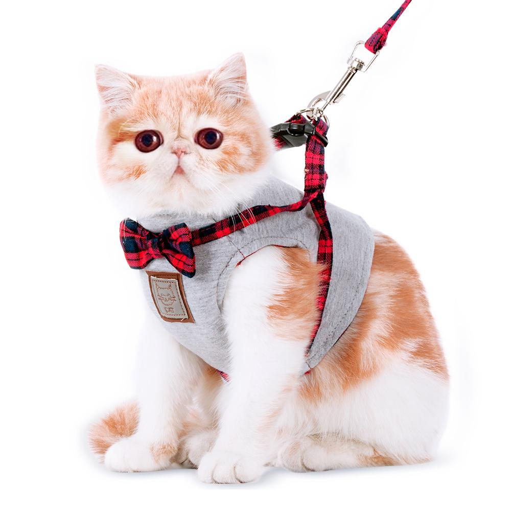 Шлейка для кошки картинки