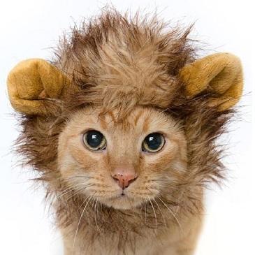 шапка грива льва